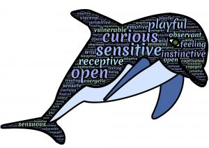 dolphin-887803_1920